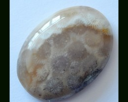 Natural Coral Fossil Cabochon,59 Cts